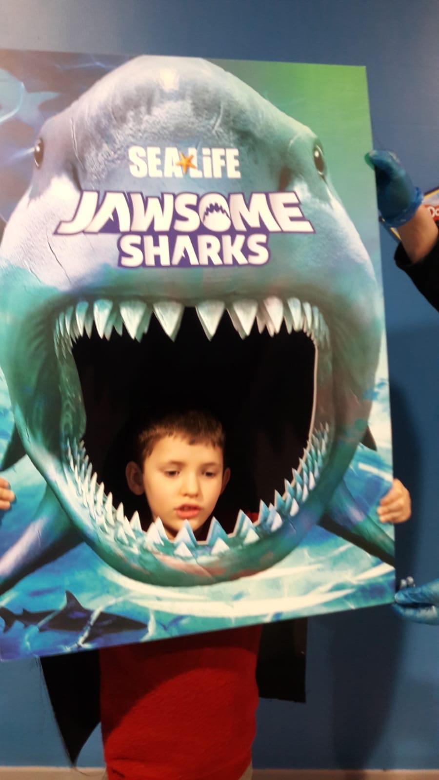 hasbro play-doh jawsome sharks sea life centre