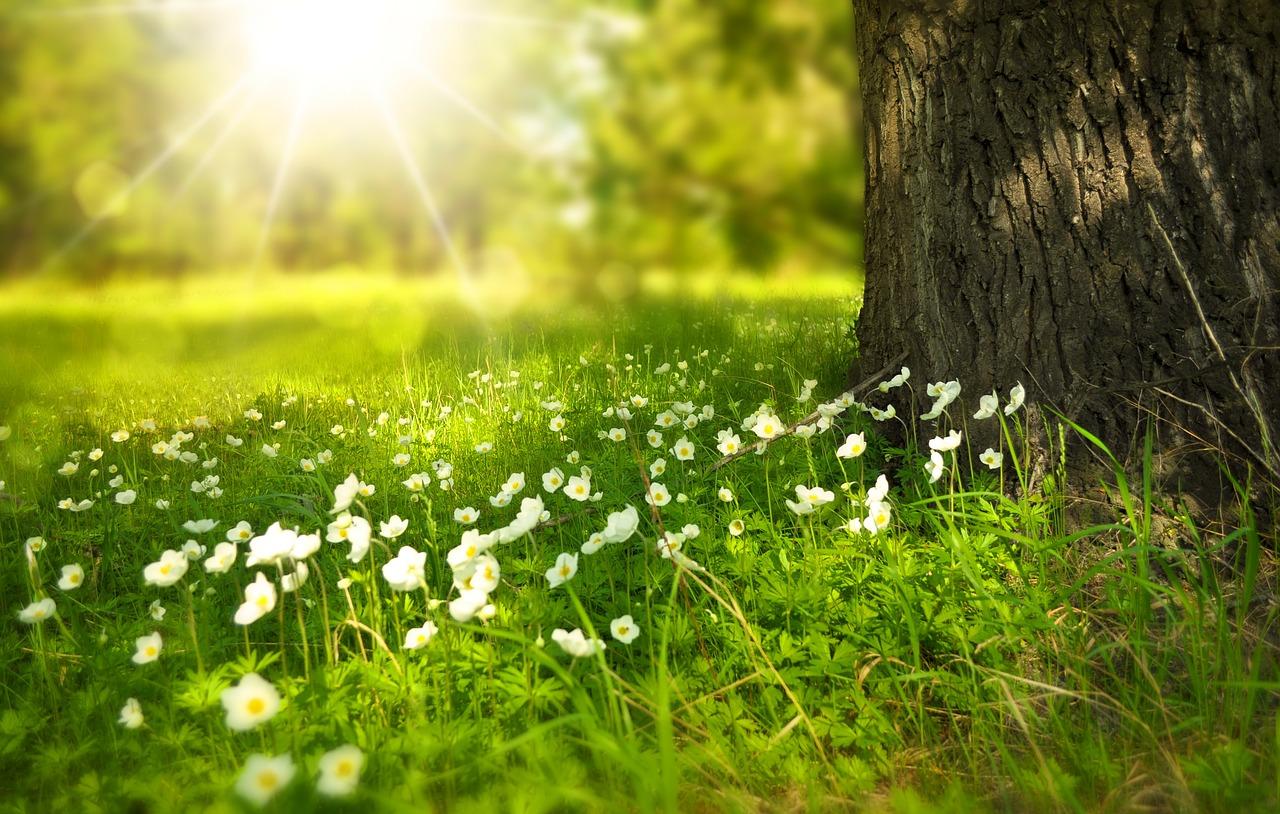 ways to celebrate the spring equinox
