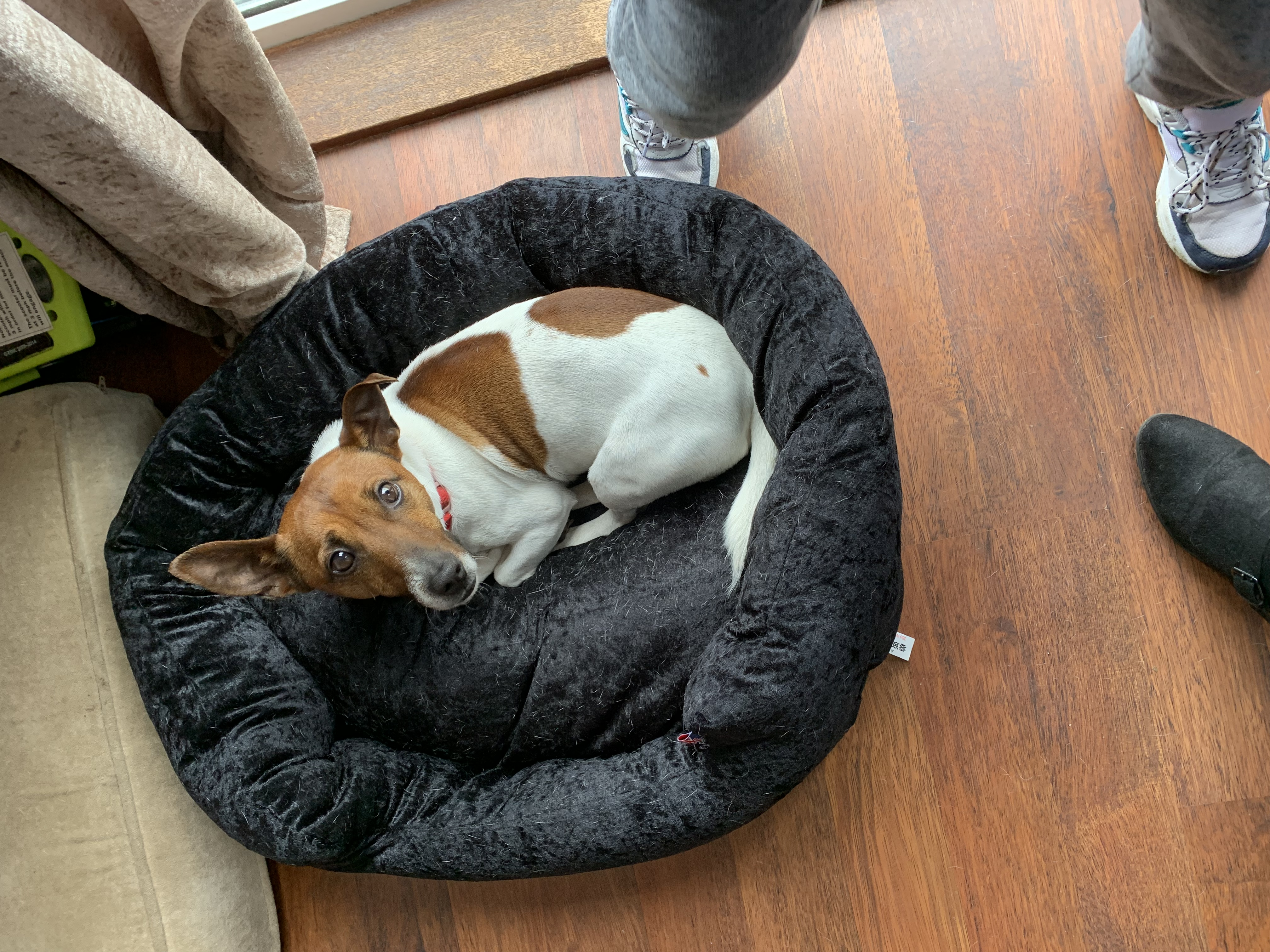 bunty pet products dog bed review